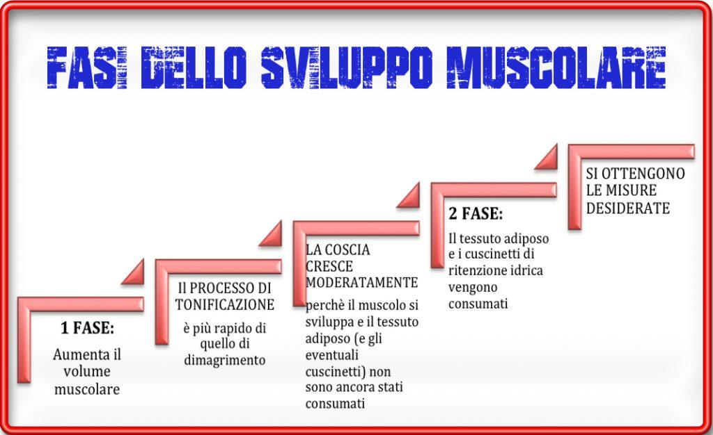 Effetti collaterali dello sport: fasi sviluppo muscolare
